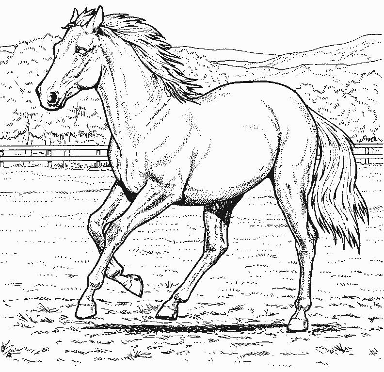 coloriage cheval course