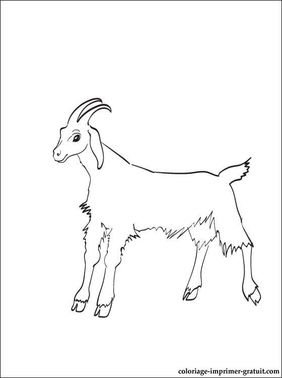 dessin à imprimer chevre