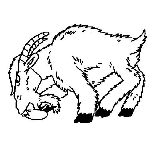 coloriage à dessiner à imprimer chevreuil