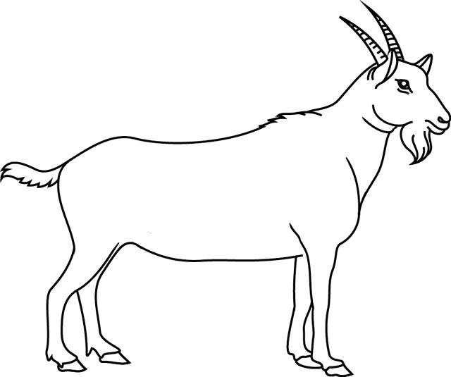 coloriage chèvre montagne