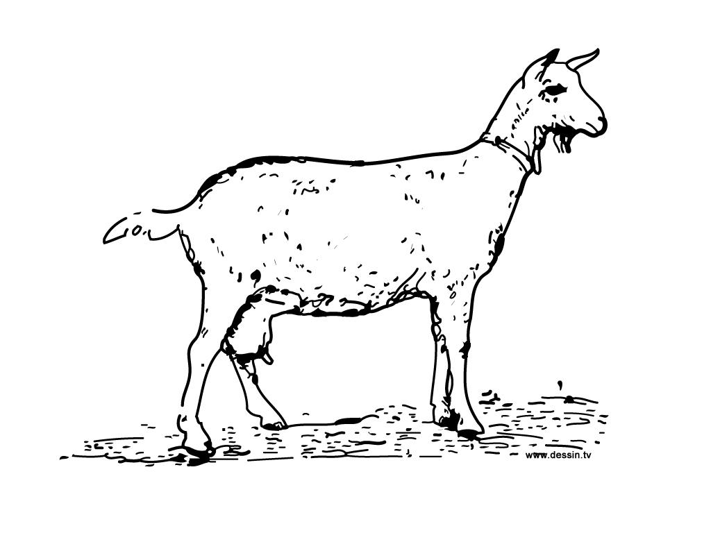 dessin à colorier le loup la chèvre et les 7 chevreaux