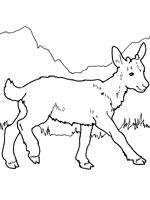 dessin la chèvre et les biquets