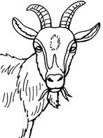 dessin gratuit de chevre