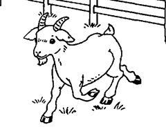 dessin à colorier chèvre a imprimer