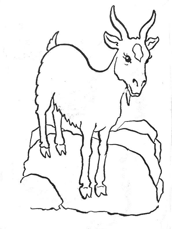 dessin chèvre à colorier