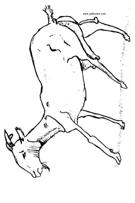 dessin chevreau
