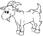 dessin chèvre chevreau