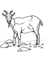 dessin animaux chèvre