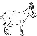 dessin chèvre de monsieur seguin