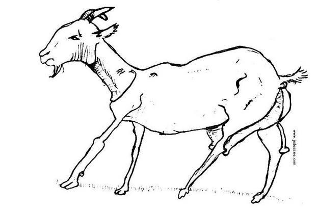 dessin à colorier la chèvre de mr seguin