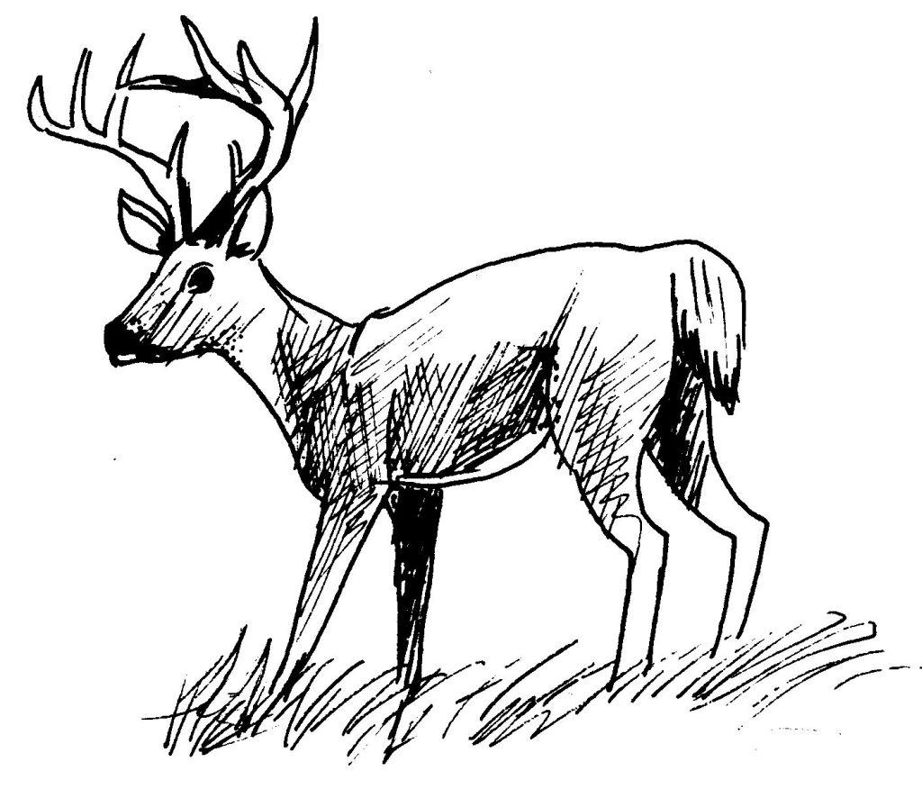 dessin à colorier chevreuil a imprimer