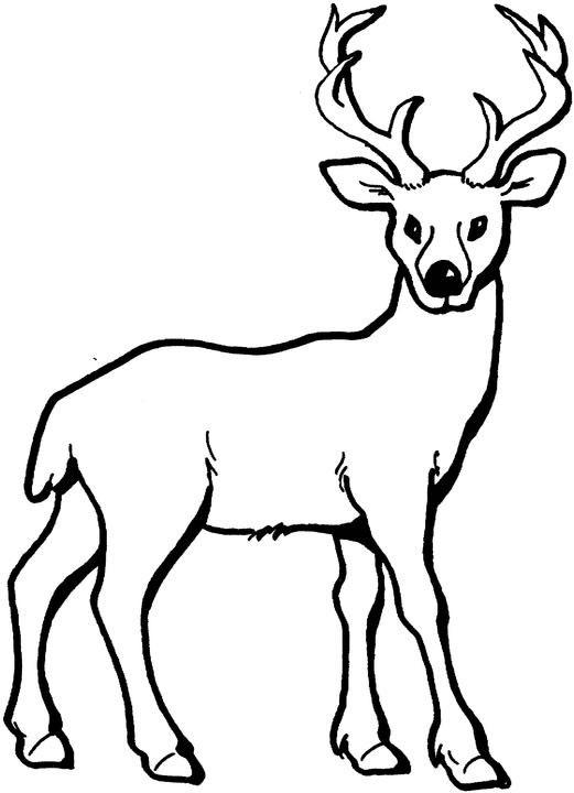 dessin à colorier de chevreuil