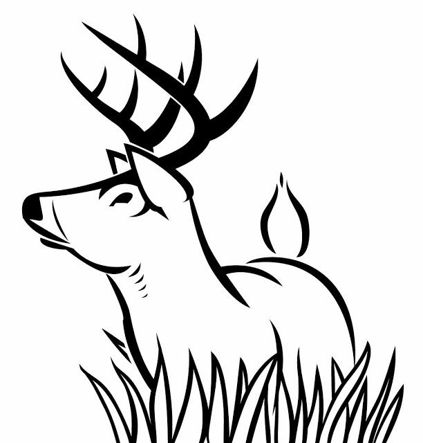 Coloriage dessiner chevreuil - Dessiner un cerf ...