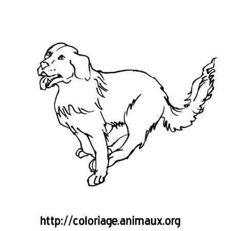 Pin pin bebe boxer coloriage pinterest pictures on pinterest - Coloriage de chien boxer ...