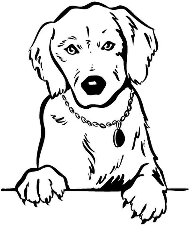 coloriage chien golden retriever a imprimer