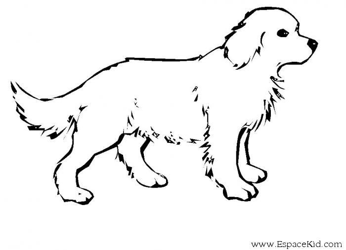 coloriage d'un chien imprimer