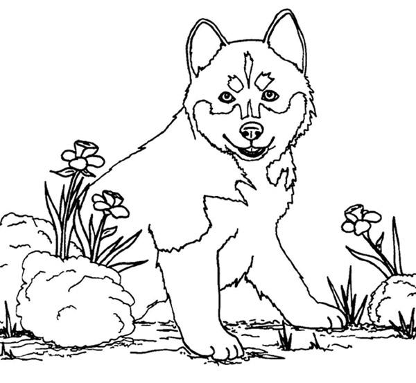 coloriage interactif chien