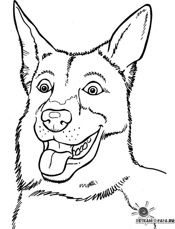 Coloriage imprimer chien et chat - Coloriage chien ...