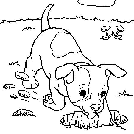 coloriage chien qui court