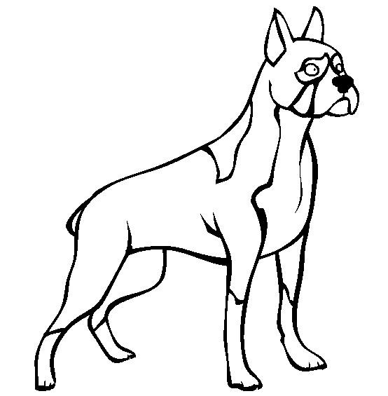 Coloriage de chien facile a dessiner for Boxer puppy coloring pages