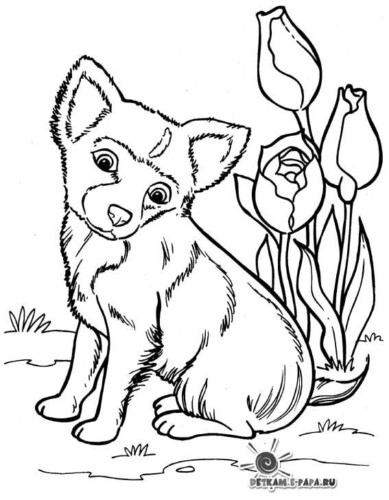 coloriage chien de race