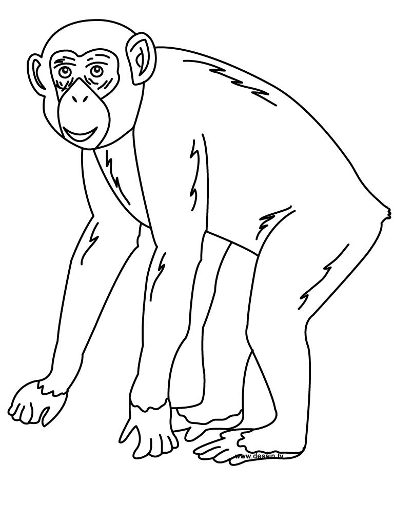 coloriage à dessiner chimpanzé