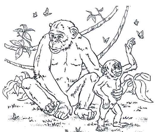 coloriage de chimpanzé