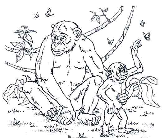 coloriage de chimpanz�