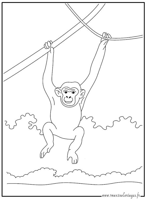 dessin chimpanz�