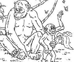 coloriage chimpanzé imprimer