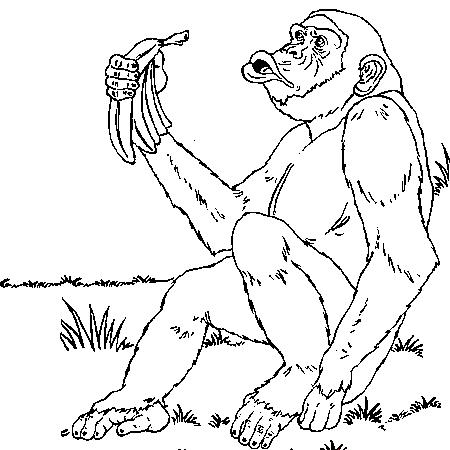 dessin à colorier de chimpanzé