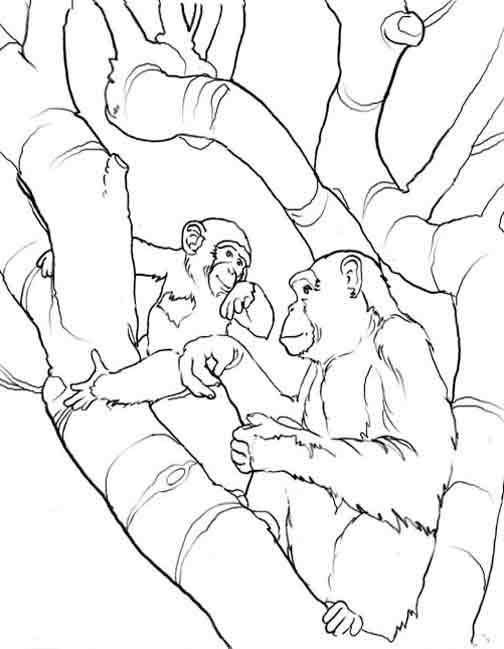 dessin de chimpanz�