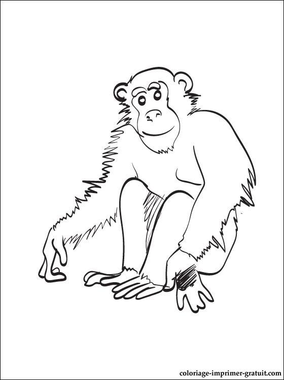126 Dessins De Coloriage Chimpanz 233 S 224 Imprimer