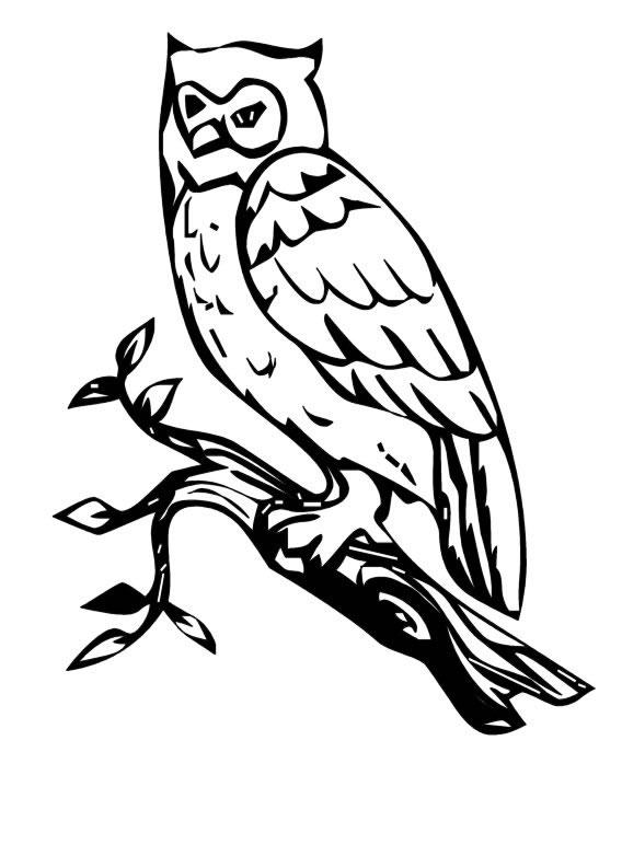 dessin à colorier chouette hibou