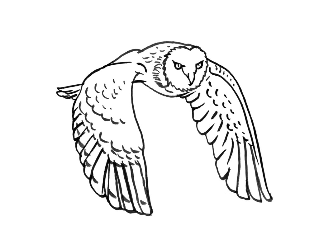 coloriage à dessiner chouette qui vole
