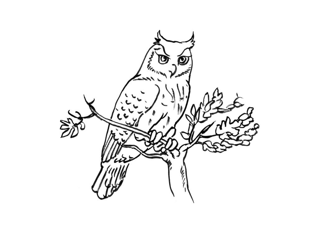 coloriage à dessiner chouette rigolote