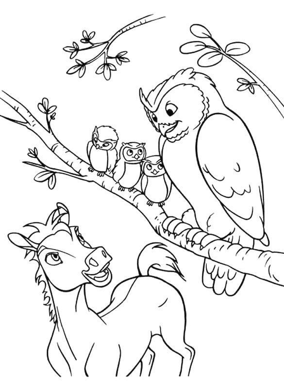 coloriage à dessiner chouette imprimer gratuit