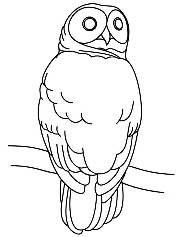 dessin à colorier chouette hulotte