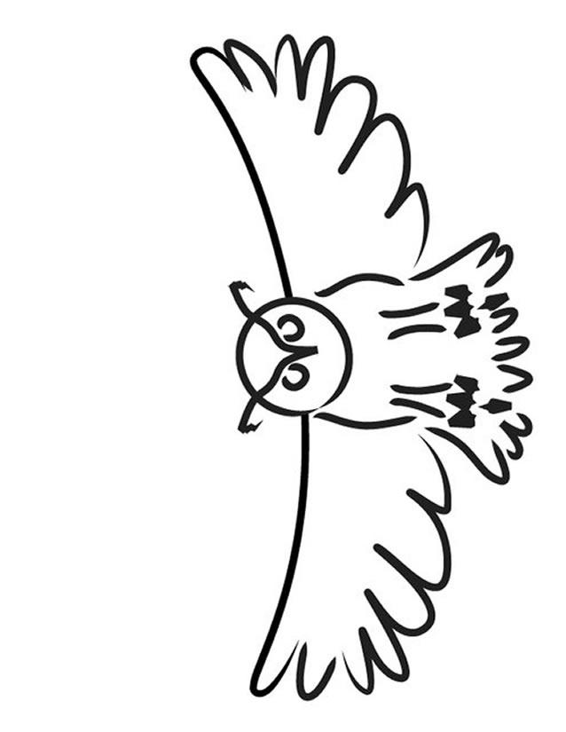 coloriage chouette hibou