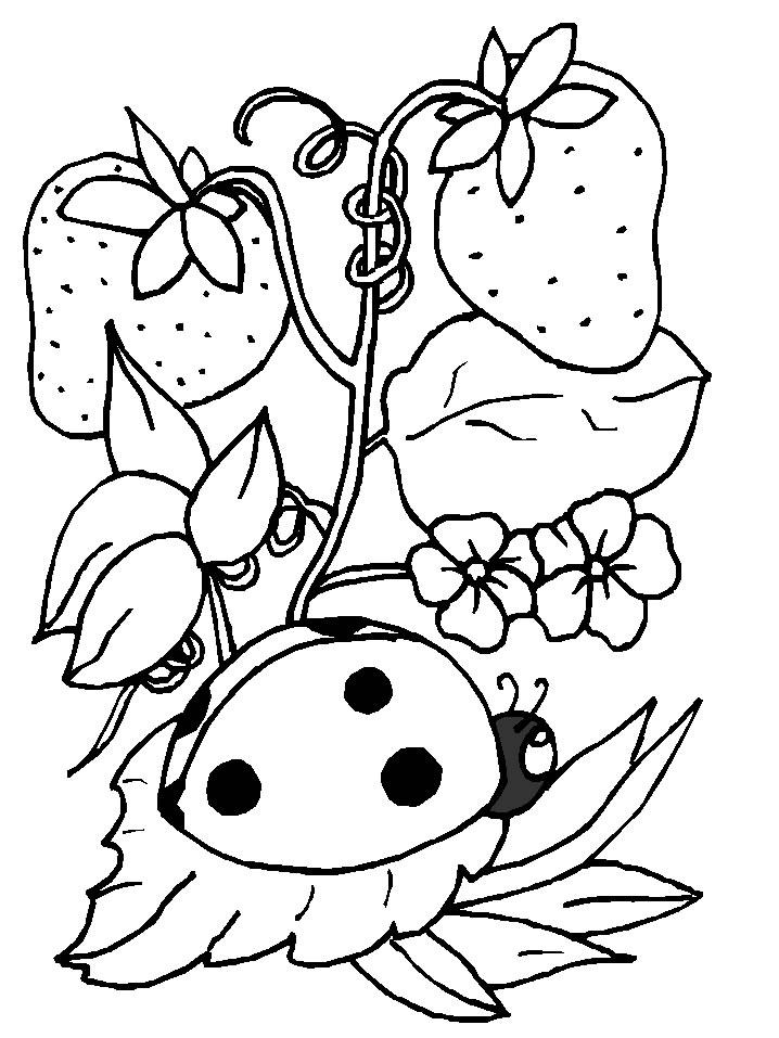 dessin à colorier coccinelle à imprimer gratuit