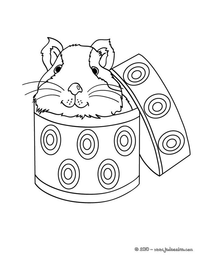 19 dessins de coloriage cochon d 39 inde imprimer for Free guinea pig coloring pages