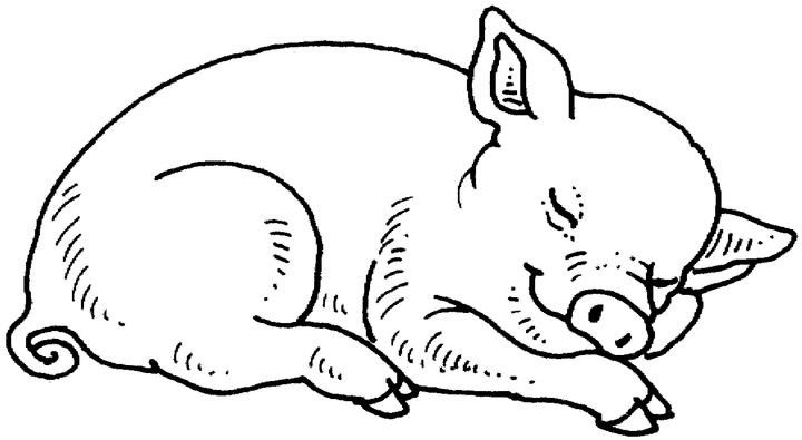 coloriage cochon pirate