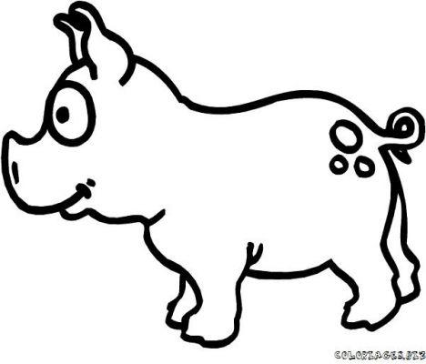 Dessin A Colorier Imprimer Gratuit Cochon D Inde