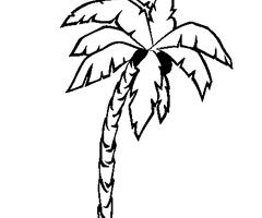 16 dessins de coloriage cocotier imprimer imprimer - Dessin de palmier ...