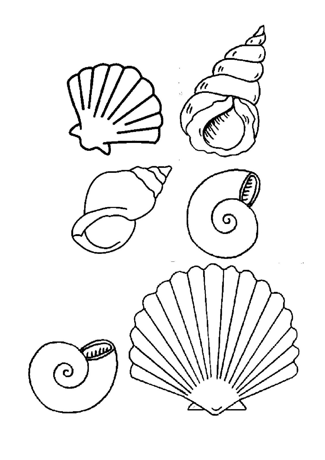 19 dessins de coloriage coquillage de mer imprimer - Coloriage de coquillage ...