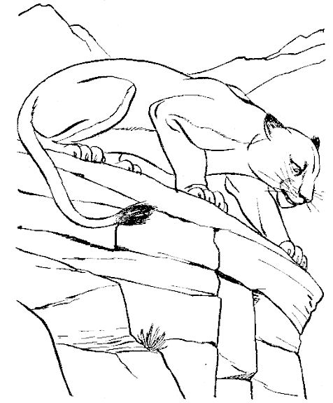 coloriage à dessiner cougar