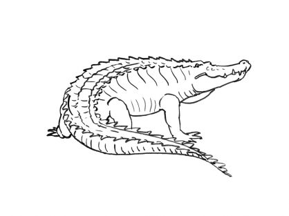 Dessin un crocodile - Dessiner un crocodile ...