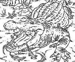 Coloriage Animaux Crocodile.Coloriage Gratuit A Imprimer Crocodile