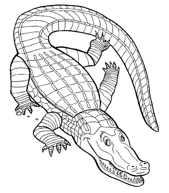114 Dessins De Coloriage Crocodile 224 Imprimer