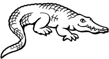 coloriage à dessiner magique crocodile maternelle